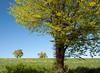 Dunsford summer scene, Devon 4 by chris-parker