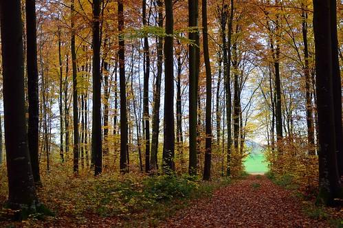 Le chemin d'automne