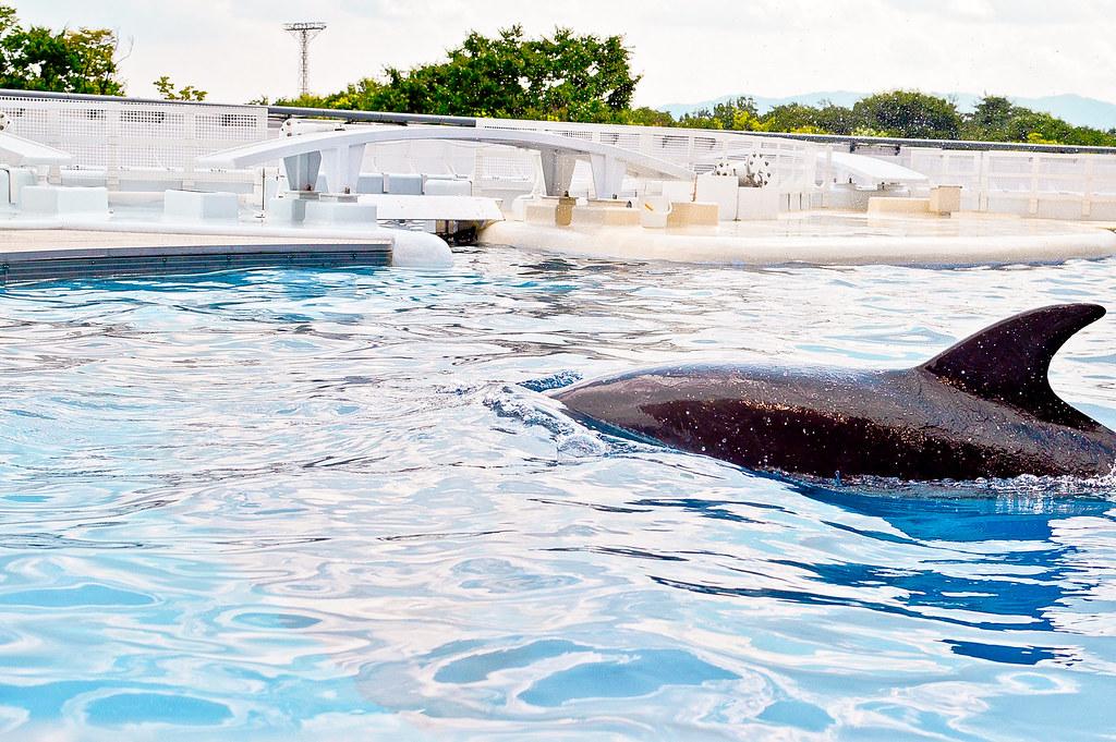 Dolphin, Kyoto Aquarium