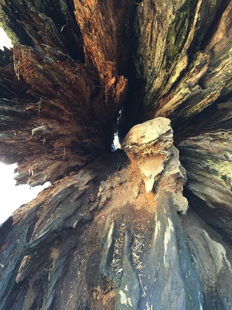 Calaveras Big Trees State Park Hotels