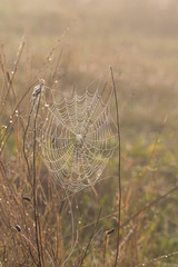 Decorated web
