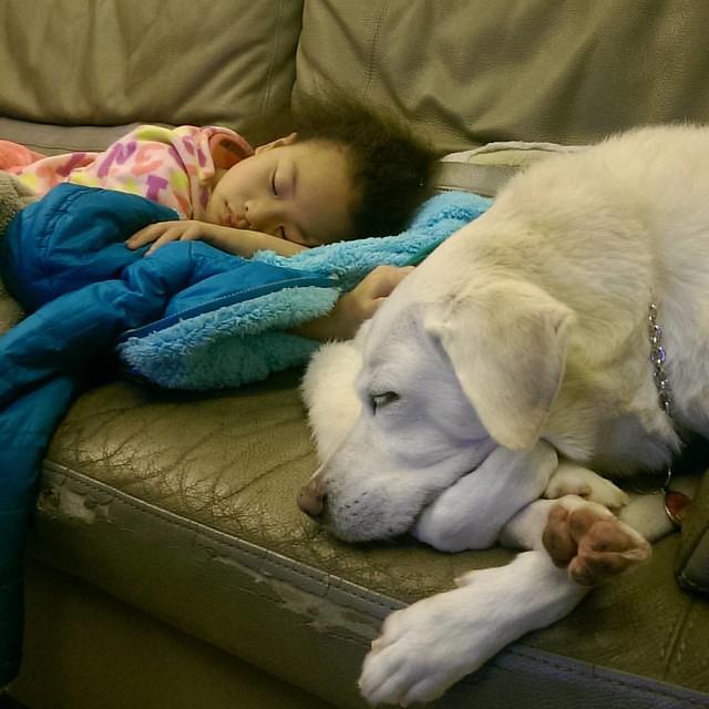 20151228 兩隻都睡著了 #林蕎安 #林球子 #有伴真好