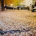 Fri, 12/11/2015 - 16:11 - Cars love driving on dry leaves