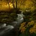 Autumnal Symphony by enricofossati