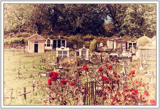 Fleurs rouges dans le cimetière