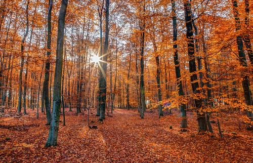 Herbstwald im Sonnenglanz