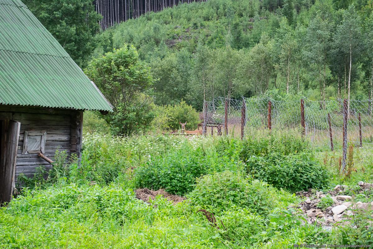 Ферма Зубров в Мысливке