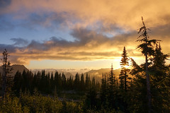 Mount_Rainier_National_Park-17.jpg